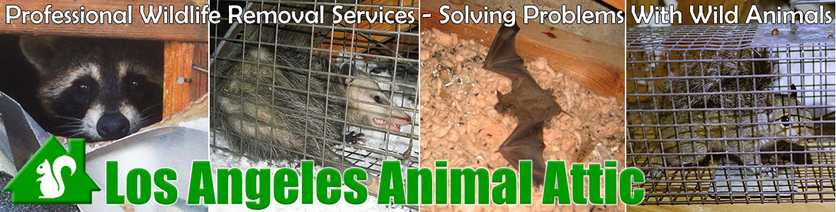 Glendale Animal Attic